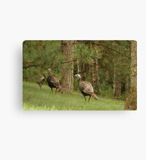 Holy Hill Turkeys Canvas Print