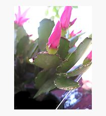 Pink Flowers in bloom Photographic Print