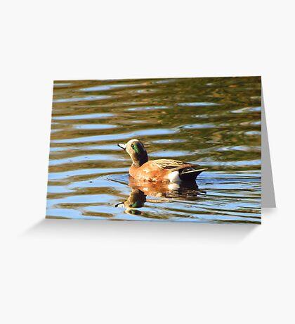 American Wigeon (Male) ~ Sunrise Seeker Greeting Card