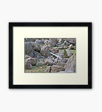 Granite, granite everywhere! Framed Print