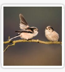 Long-tailed tits Sticker