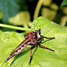 Don't Bug Me! by aprilann