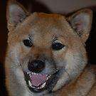 Laughing Shiba Inu by bunnij