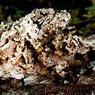 Termite Tree Trunk by bunnij