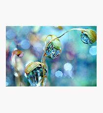 Rainbow Moss Drops Photographic Print