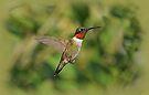 Ruby-Throated Hummingbird in Flight by Sandy Keeton