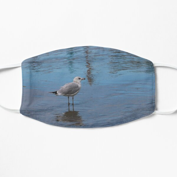 Seagull Exploring Flat Mask