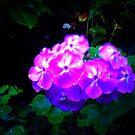 #NeinGrenze #Flowers by OLIVER W