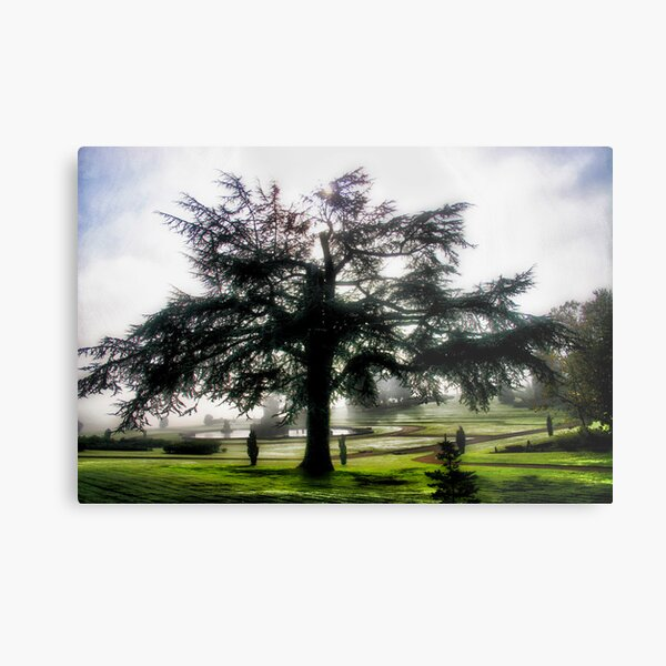 Tree Dreams Metal Print