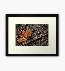 Rusty Leave  Framed Print