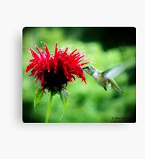 Sweetest Nectar Canvas Print
