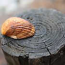 Shell on a post by mdench