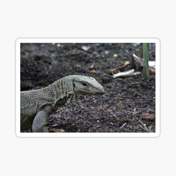 Clouded Monitor Lizard Sticker