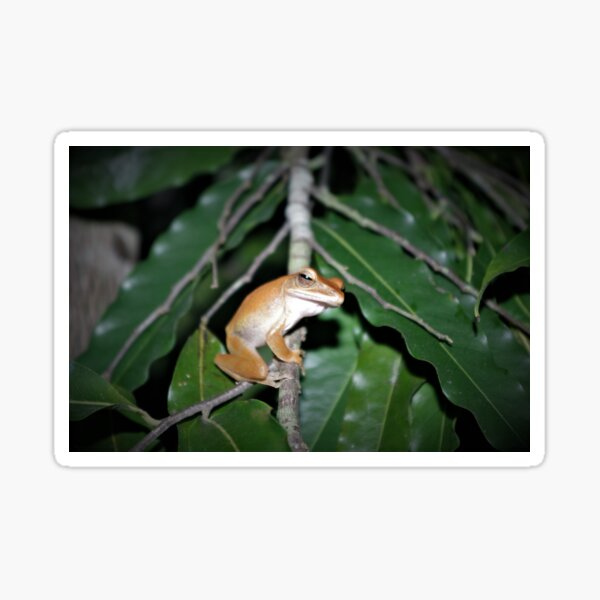 Four-lined Tree Frog Sticker