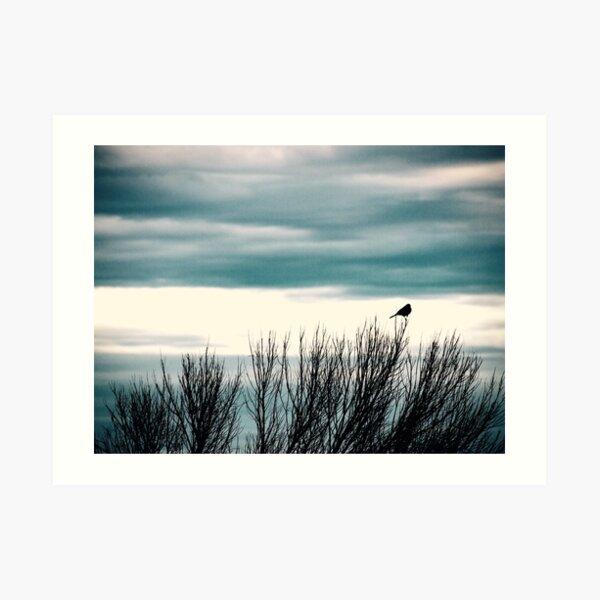 Little Bird, Bird Art, Bird Photography Art Print