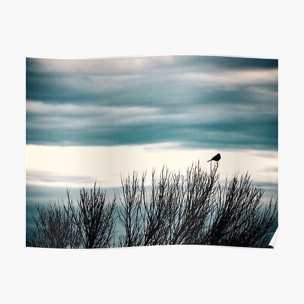 Little Bird, Bird Art, Bird Photography Poster
