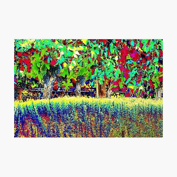 Vineyard Art, Colourful Graphic Photographic Print