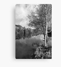 Lake Birch Trees Canvas Print
