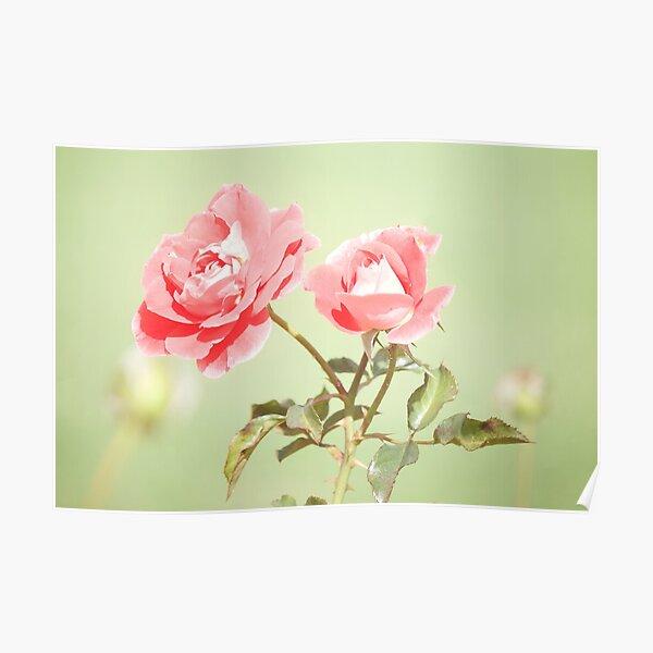 Retro Rose Photo, Flower Art Poster