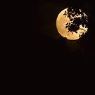 Full Moon by Veronica Schultz