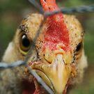 Madder than a wet hen... by Seth LaGrange
