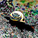 Color and Snail by theartguy