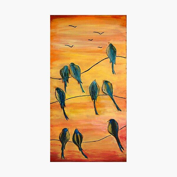 Birds On Wires Photographic Print