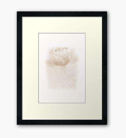 Misty Rose Framed Print