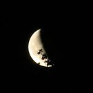 Leafy moon by mysticcatnip