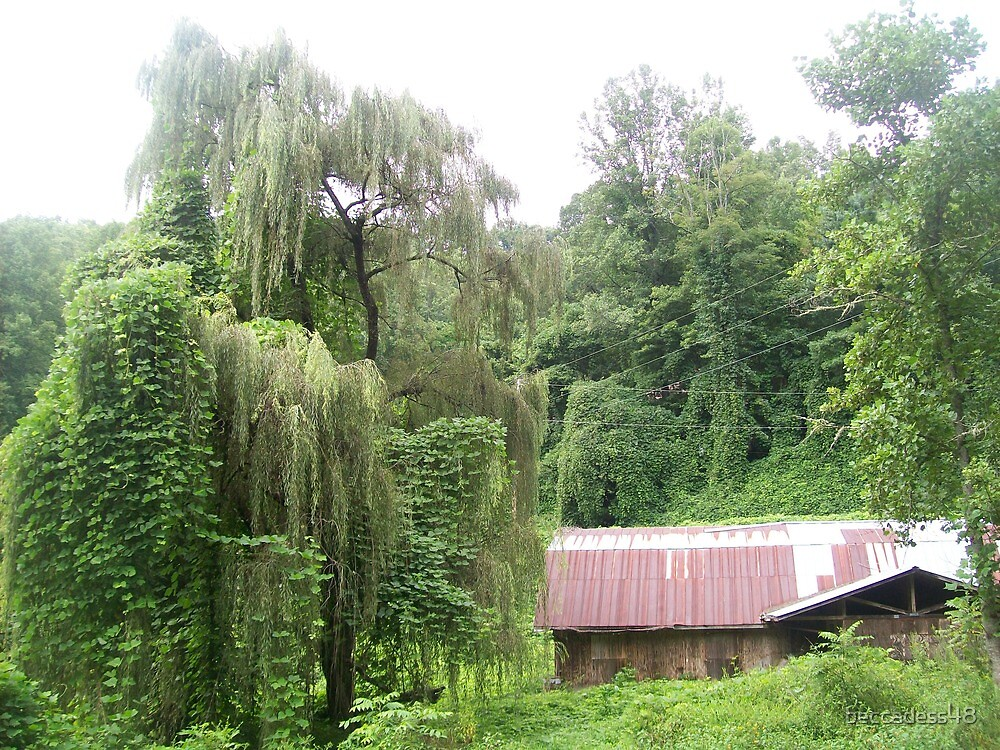 Barn & Willow by beccadess48