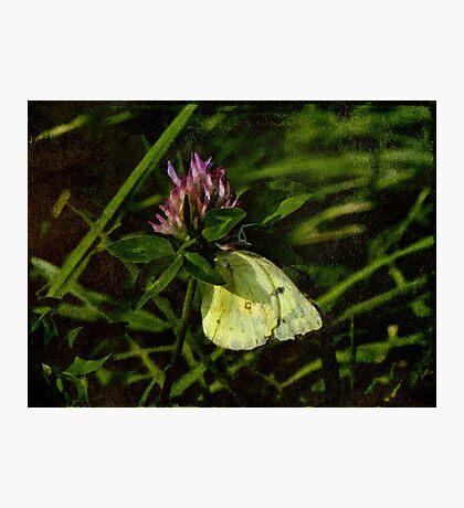 Summer site Photographic Print
