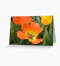 Orange and Yellow Tulips Greeting Card