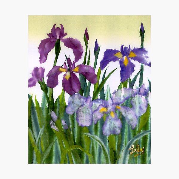 Irises Photographic Print
