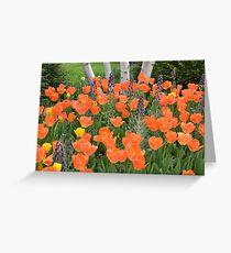 Orange Tulip Garden Greeting Card