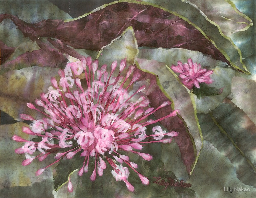 Clerodendron by Lily Nakao
