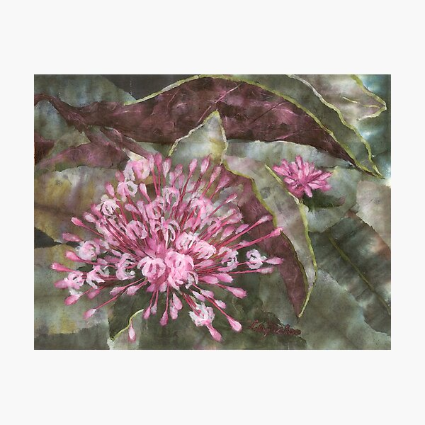 Clerodendron Photographic Print