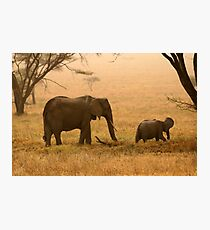 Elephants in the Dust Photographic Print