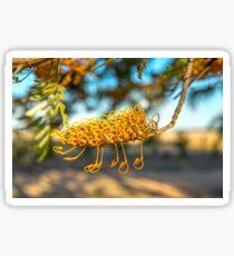 Grevillea flower of silky oak, Sticker