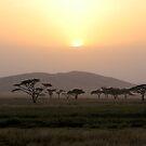 Sunset on the Serengeti by David McGilchrist