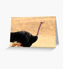 Ostrich portrait Greeting Card