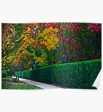 Autumn trees in the park Poster