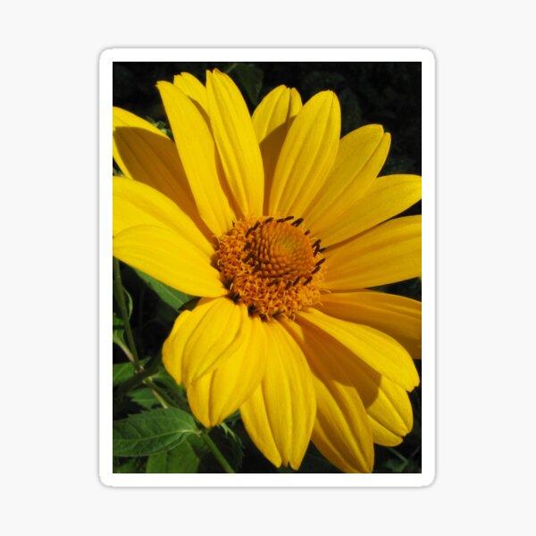 Yellow Beauty Sticker