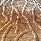 Mitey Maze by Kylie Newton