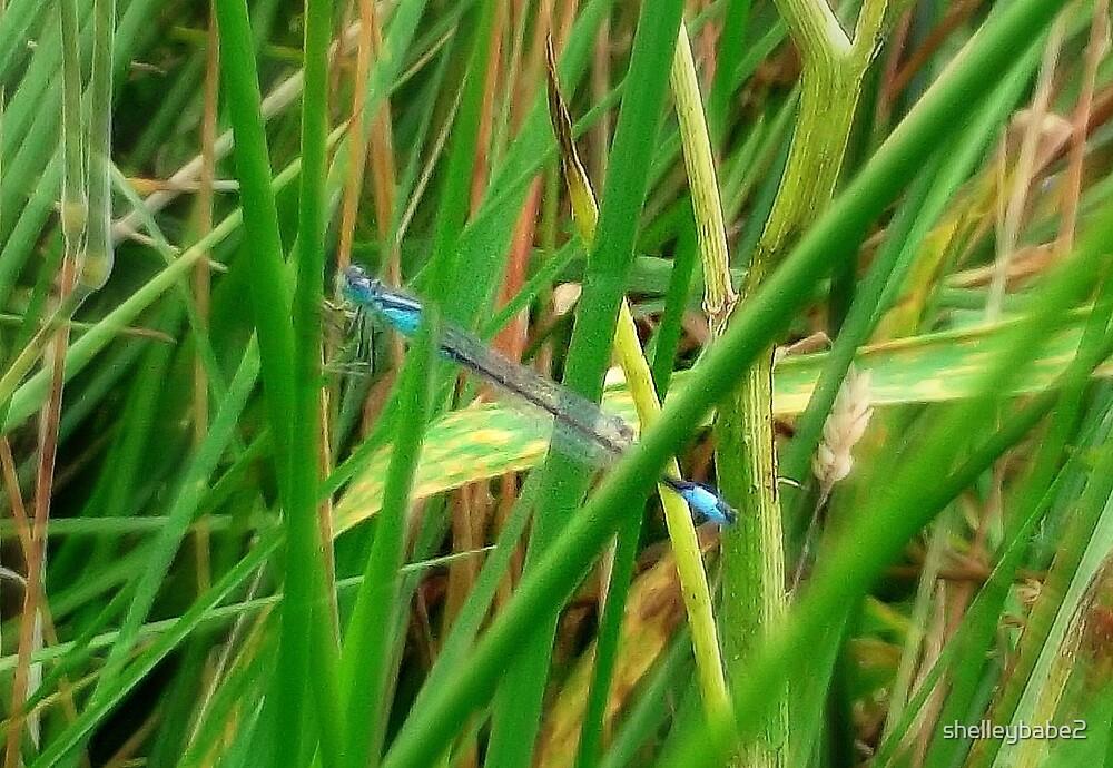 Feeling Blue... by shelleybabe2