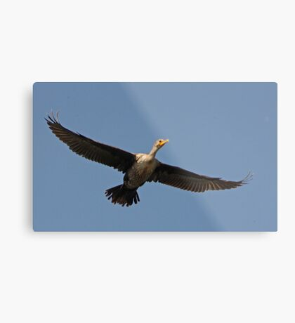Flying Cormorant Metal Print