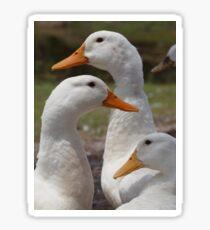 Waterfowl Yard Sticker