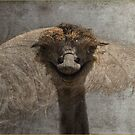 THE OSTRICH AND THE FEATHER by Magriet Meintjes