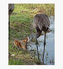 Crane Nursery- Waterfowl Yard Photographic Print