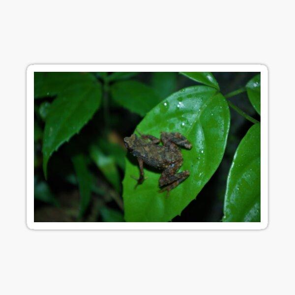 Kadamaian Stream Toad Sticker