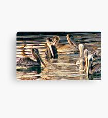 Pelicans of love Canvas Print